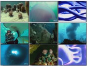 BBC: Эволюция Жизни. Моря жизни (фильм 1) / BBC: Journey Of Life